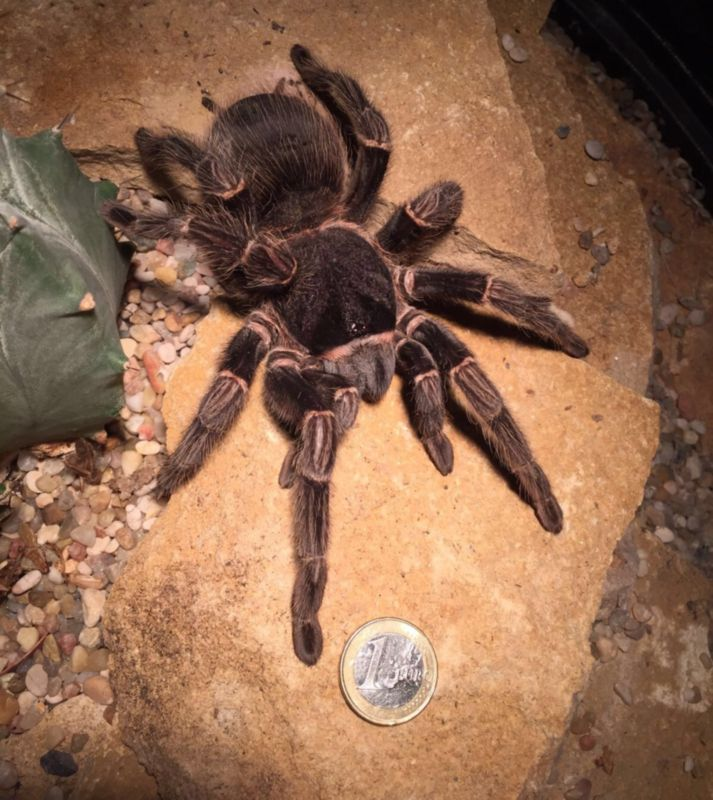 Terra Natura Benidorm - Largest Tarantulas in the world